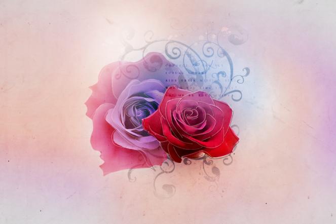 _rose_texture_3